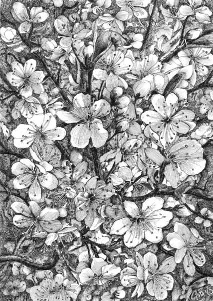 Blooming Tree Drawing - Blooming Apple Tree by Alexander Potekhin