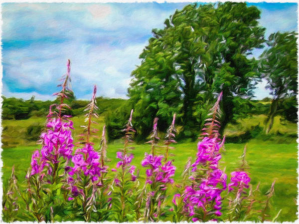 Digital Art - Blooming Fireweeds In Summer by James Truett