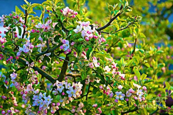 Photograph - Blooming Fruit Tree At Springtime by Tatiana Travelways