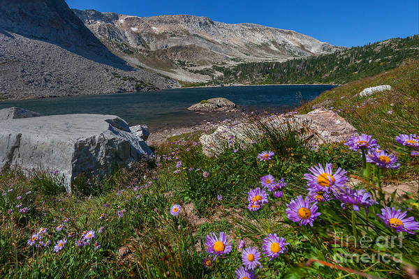 Wall Art - Photograph - Blooming In Snowy Range by Steven Reed