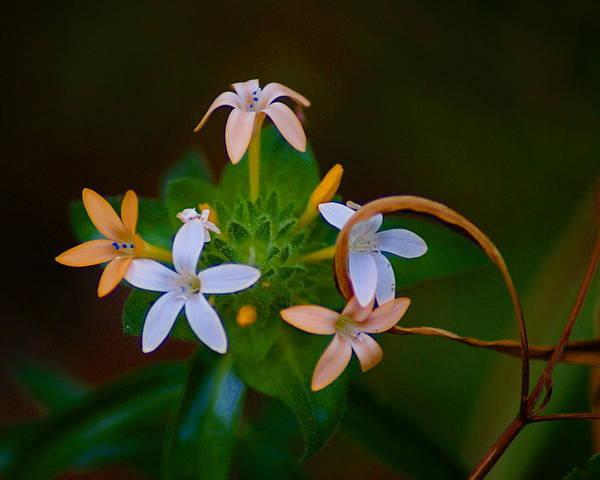 Photograph - Blooming Joy by Ben Upham III