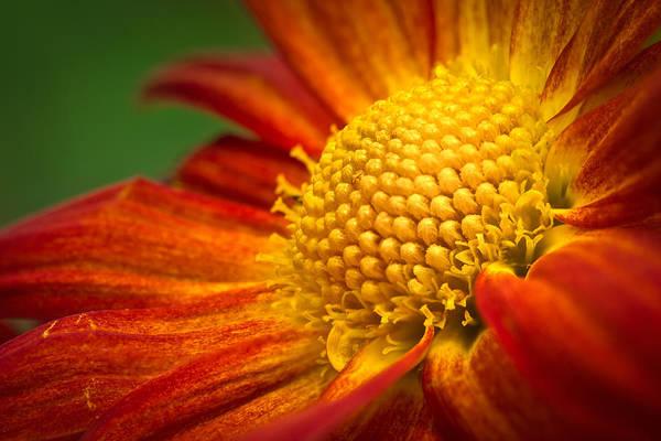 Photograph - Blooming by Lutz Baar