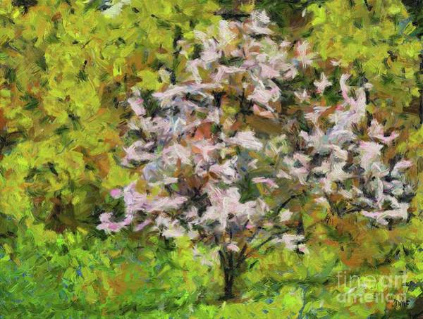 Wall Art - Painting - Blooming Magnolia by Dragica Micki Fortuna