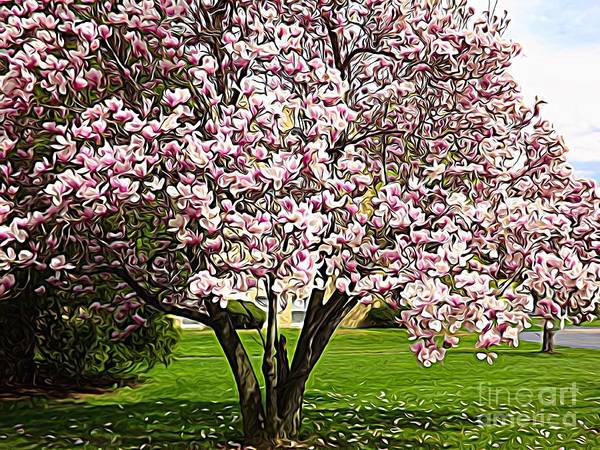 Photograph - Blooming Magnolia Tree Expressionistic Abstract by Rose Santuci-Sofranko