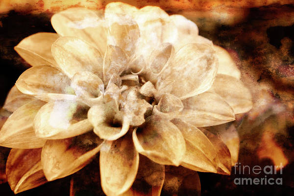 Photograph - Blooming Perfection by Lori Dobbs