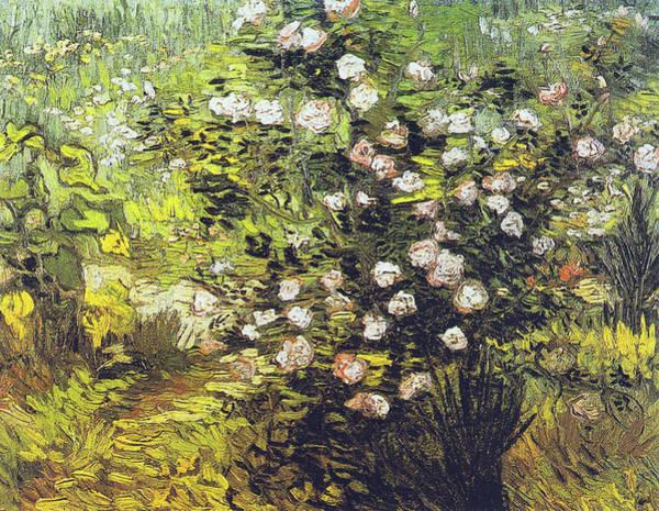 Painting - Blooming Rose Bush by Vincent van Gogh