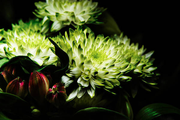 Photograph - Blooming White Dahlia by Dennis Dame