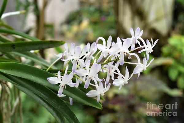 Blooming White Flower Spike Art Print