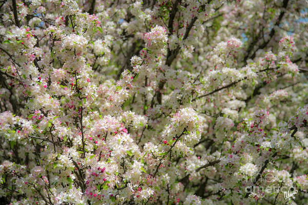 Photograph - Blooms by Alana Ranney