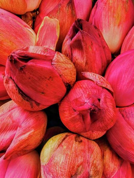 Photograph - Blooms-kandy-sri Lanka by Duncan Davies