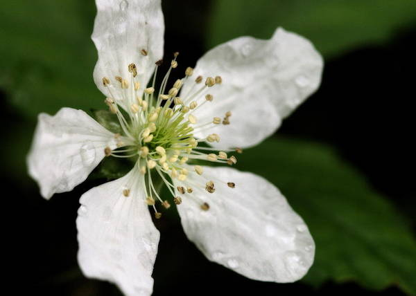 Photograph - Blossom by Angela Rath