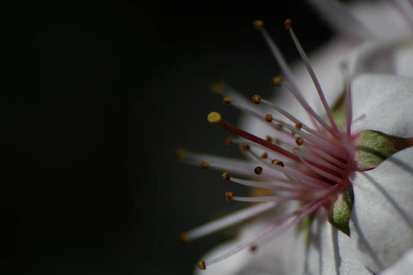 Photograph - Blossom Angle by Dylan Punke