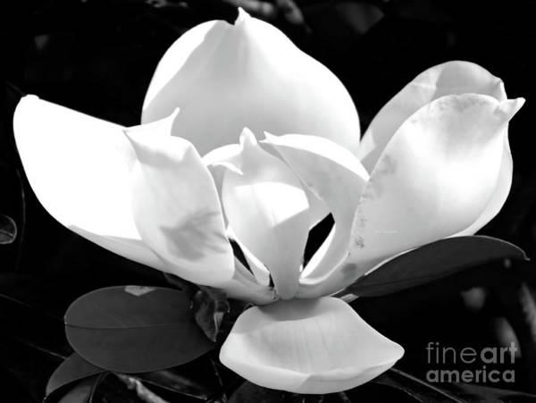 Photograph - Blossom Despite No Rain by D Hackett