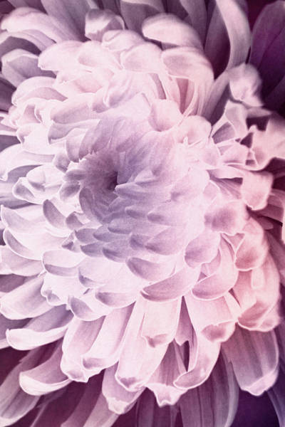 Photograph - Blossom In Light by Leda Robertson