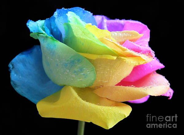 Rainbow Rose Wall Art - Photograph - Blossom Of Love by Krissy Katsimbras