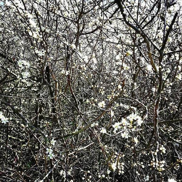 Blossom Photograph - Blossomarama by Nic Squirrell
