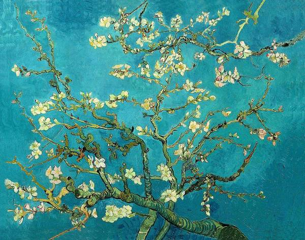 Almond Painting - Blossoming Almond Tree by Van Gogh