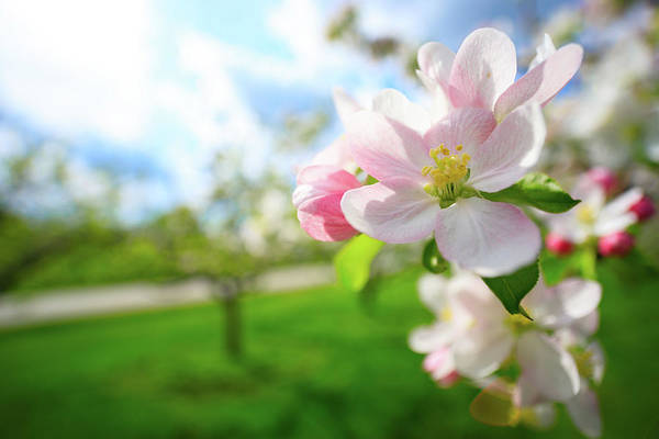 Photograph - Blossoming by Brian Hale