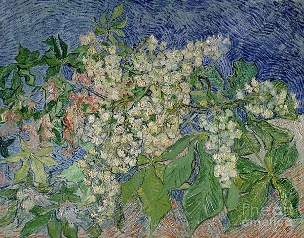 Van Gogh Wall Art - Painting - Blossoming Chestnut Branches by Vincent Van Gogh