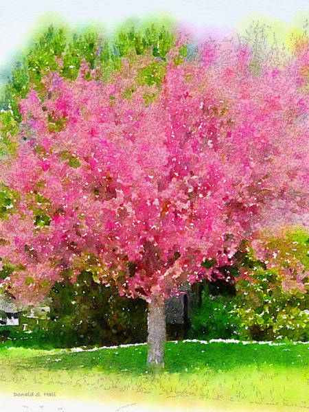 Digital Art - Blossoming Crabapple Tree by Donald S Hall