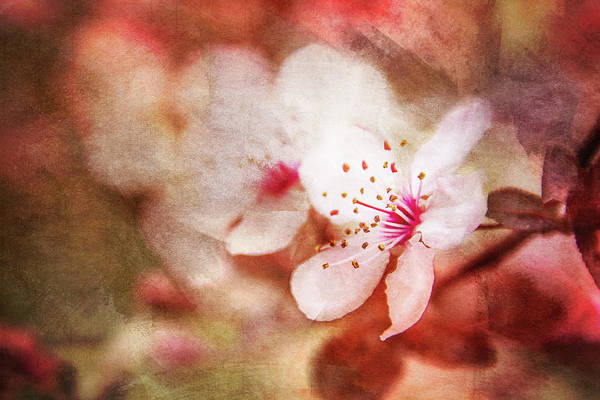 Wall Art - Digital Art - Blossoms Against The Dark by Terry Davis