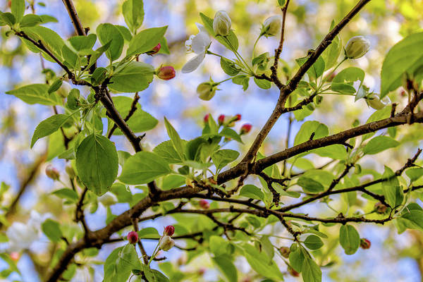 Photograph - Blossoms And Leaves by Nick Smith