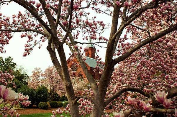 Smithsonian Photograph - Blossoms At The Castle by Frank Garciarubio