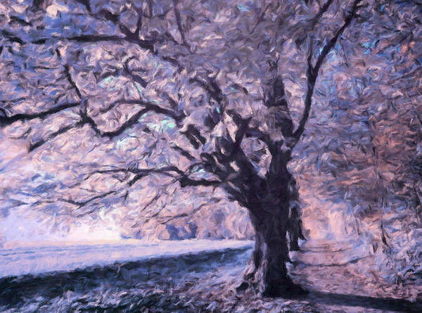 Painting - Blossoms In Winter by Isabella Howard