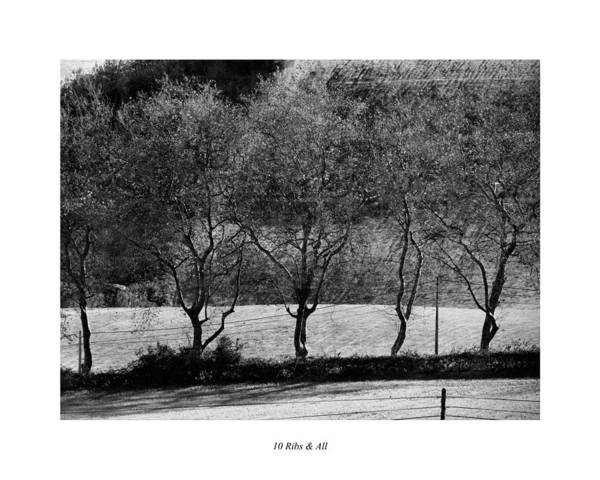 Photograph - 10 Ribs And All by Joseph Amaral