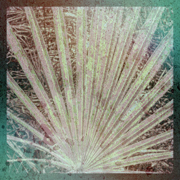 Wall Art - Photograph - Blotch Palm Frond by Marvin Spates