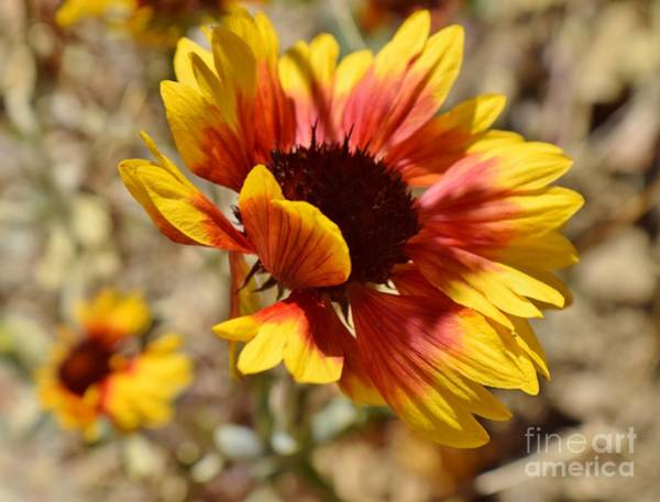 Coronado National Forest Photograph - Blowin' In The Wind by Janet Marie