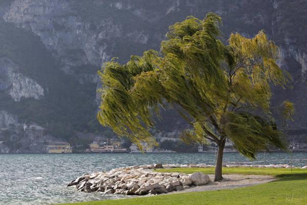 Photograph - Blowing In The Wind by Raffaella Lunelli