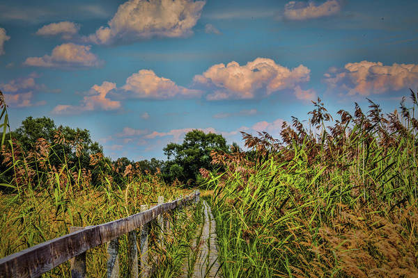 Photograph - Blowing On Path #h7 by Leif Sohlman