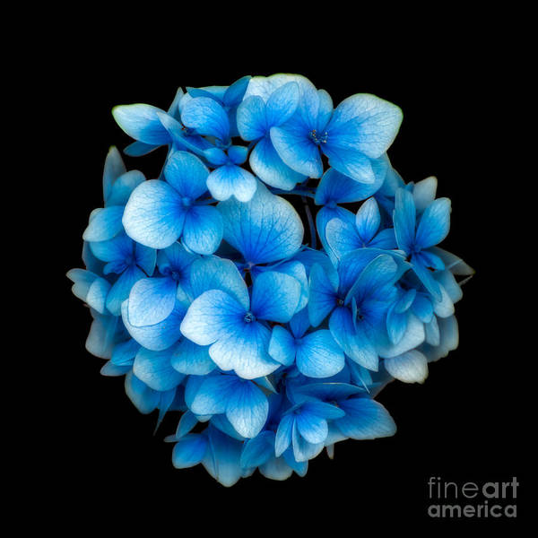 Photograph - Blue by Adrian Evans