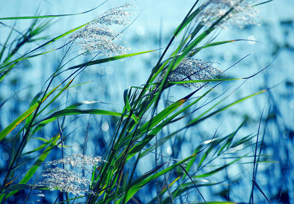 Artful Photograph - Blue Afternoon  by Susanne Van Hulst