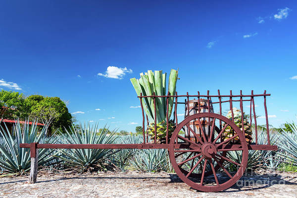 Wall Art - Photograph - Blue Agave On A Wagon by Jess Kraft
