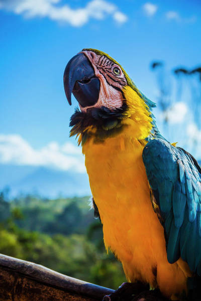 Wall Art - Photograph - Blue And Gold Macaw 2 by Happy Home Artistry