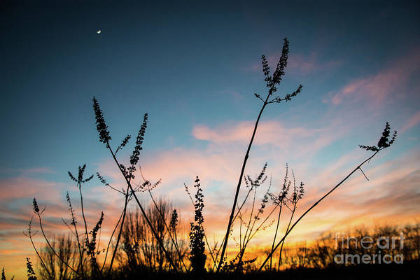Photograph - Blue And Gold Sunset by Cheryl McClure