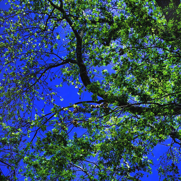 Photograph - Blue And Green by Joann Vitali