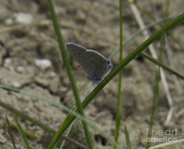 Photograph - Blue And Grey Moth by Donna L Munro