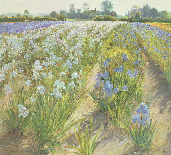 Painting - Blue And White Irises by Timothy Easton