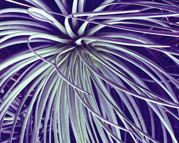 Photograph - Blue And White Stripes by Angela Murdock