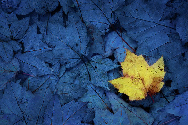 Wall Art - Photograph - Blue And Yellow - Acadia National Park by Jeff Bazinet