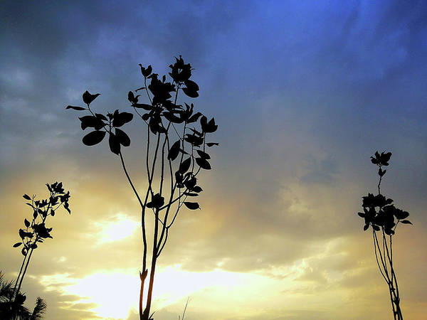 Photograph - Blue And Yellow by Atullya N Srivastava