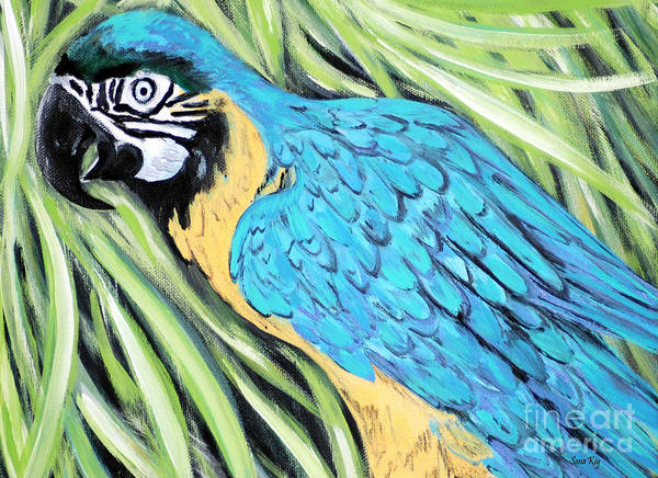 Painting - Blue And Yellow Macaw Or Blue And Gold Macaw. 2015 Art by Oksana Semenchenko
