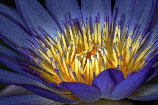Photograph - Blue And Yellow by Van Sutherland