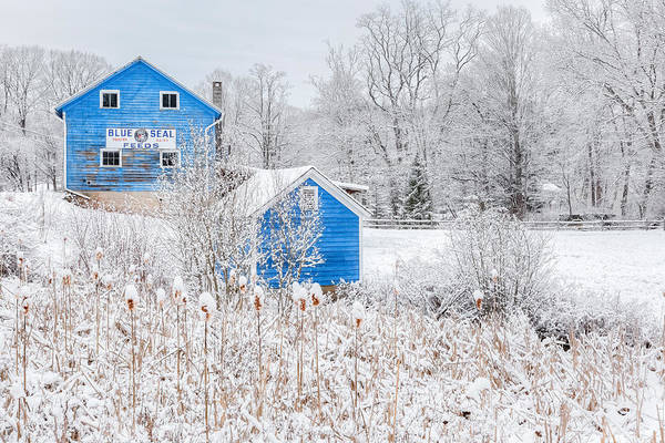 Photograph - Blue Barns by Bill Wakeley