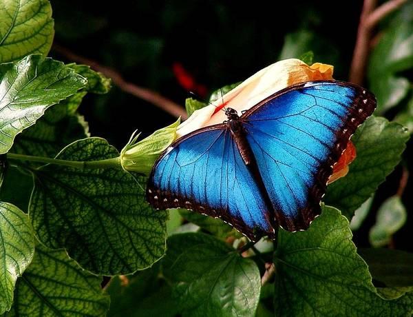Wall Art - Photograph - Blue Beauty by Jim  Darnall