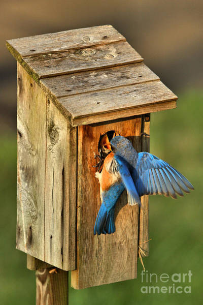 Photograph - Dinner Delivery by Adam Jewell
