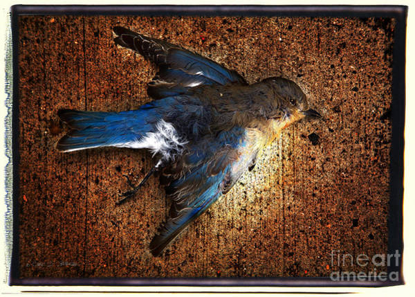 Photograph - Blue Bird Blue by Craig J Satterlee